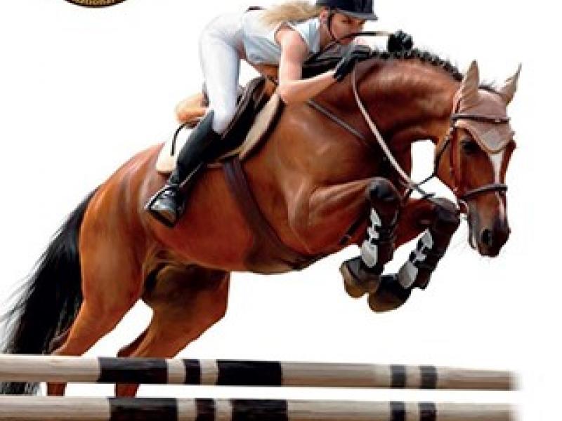 cavalli, cavallo, zpz, zpz trailer, fiera cavalli, equitazione